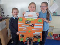 Zoo Animal Projects